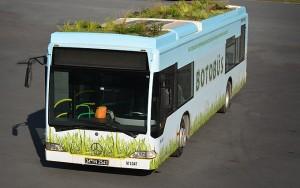 Botanik otobüs Botobüs