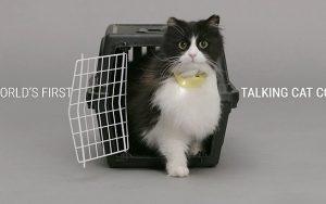 Kedileri konuşturan tasma