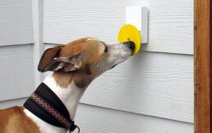 Evcil hayvanlar için kapı zili