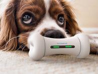Köpekler için interaktif oyuncak kemik